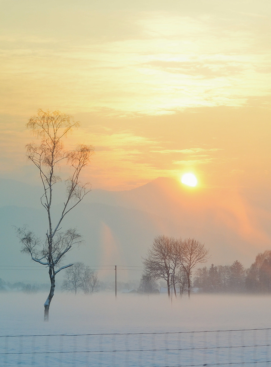 Photograph Fragile morning by Polina Khatenko on 500px