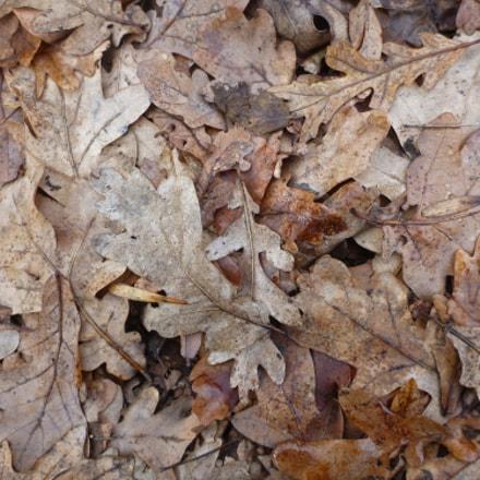 Дубовые листья, Panasonic DMC-FT4