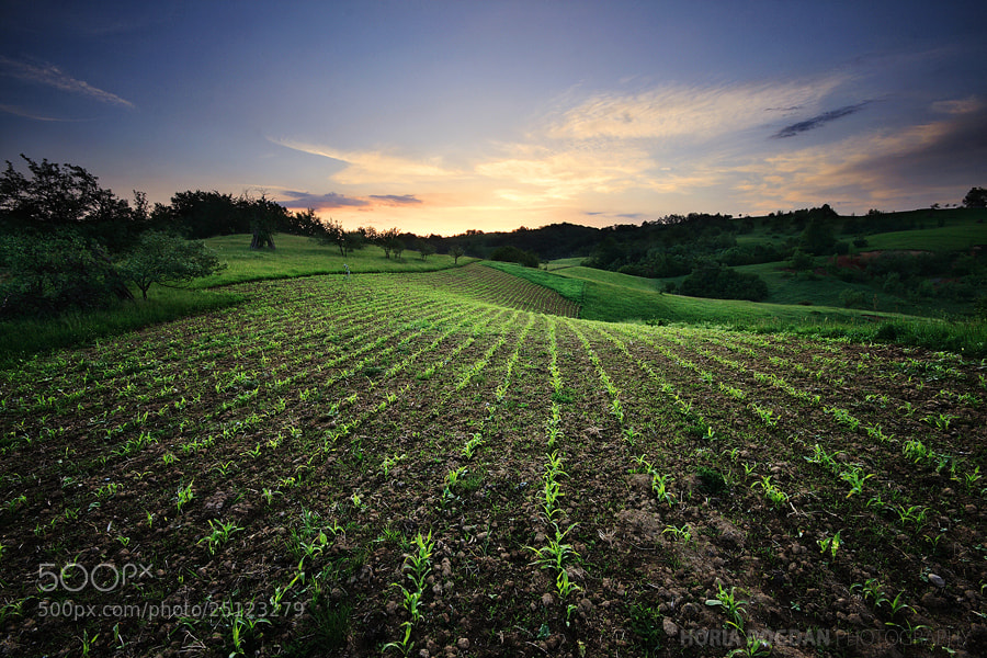 Photograph Morning crops by Horia Bogdan on 500px