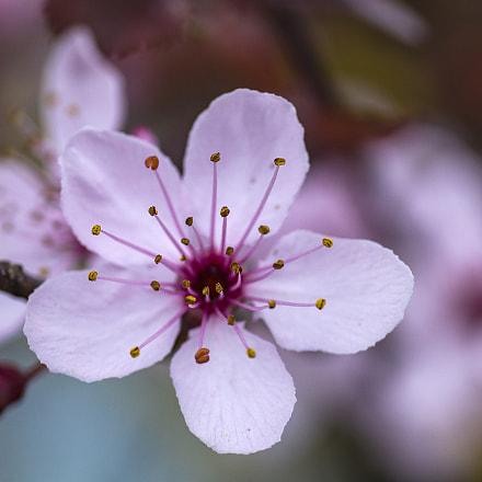 spring, Canon EOS 80D