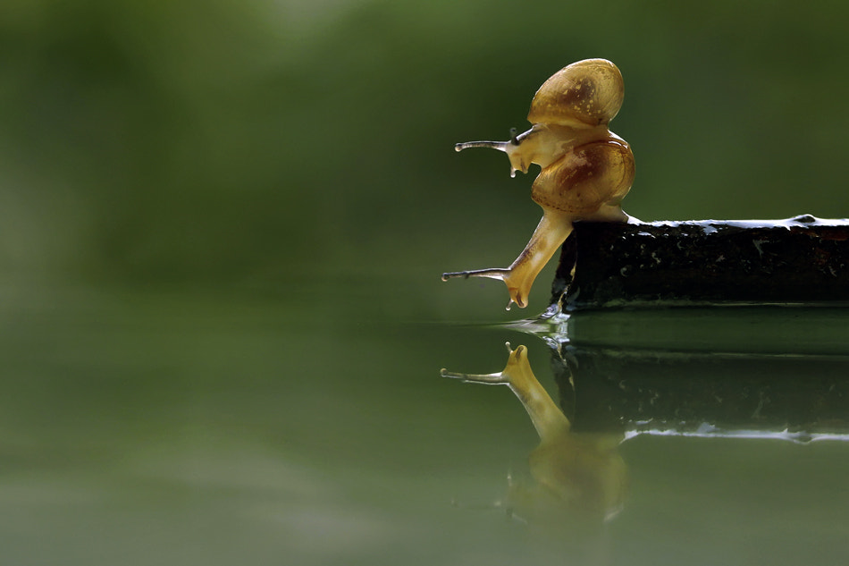 Photograph Who Are You? by teguh santosa on 500px