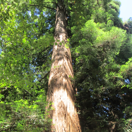 Muir Woods, Canon POWERSHOT A3400 IS