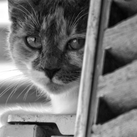 My cat (Picasso), Fujifilm FinePix S8600 S8650 S8630