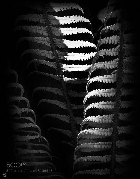 Photograph fern by Stanislav Odyagailo on 500px