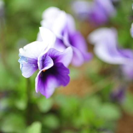 Flower, Nikon D700, Sigma Macro 105mm F2.8 EX DG