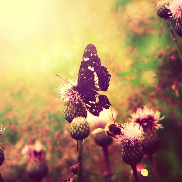 Photograph Butterfly and bee by Edyta Serafin on 500px