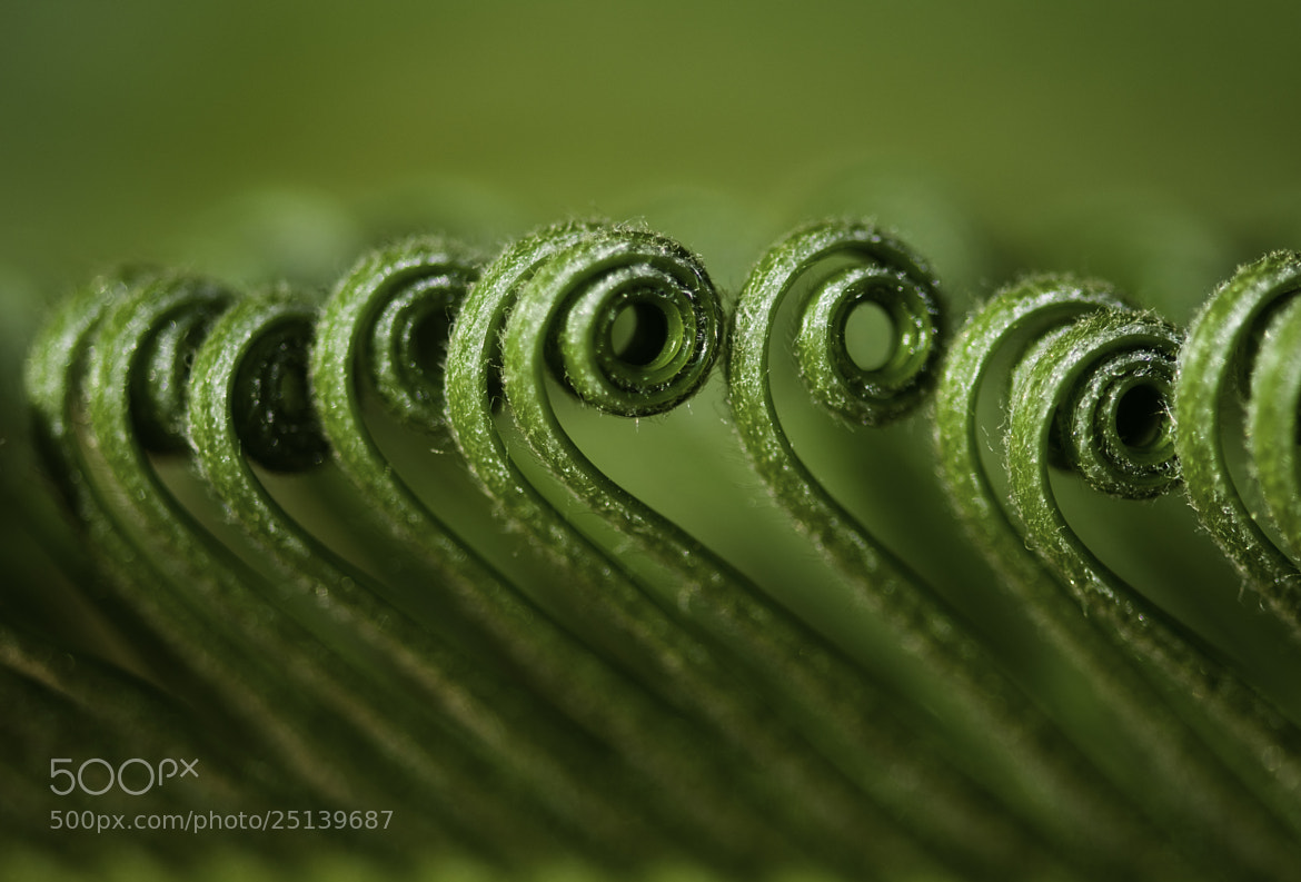 Photograph Musical instrument of nature by amit erez on 500px
