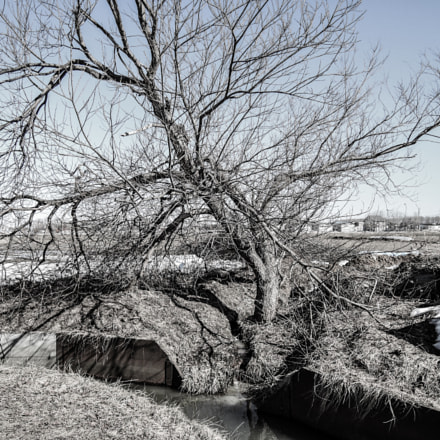 Tree, Nikon COOLPIX P340