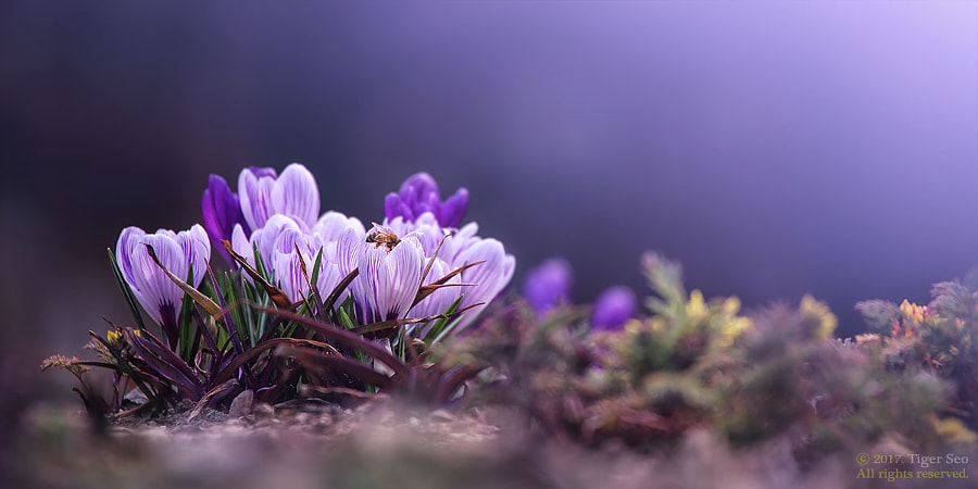 Spring pictures - Spring has come to bee by Tiger Seo on 500px.com