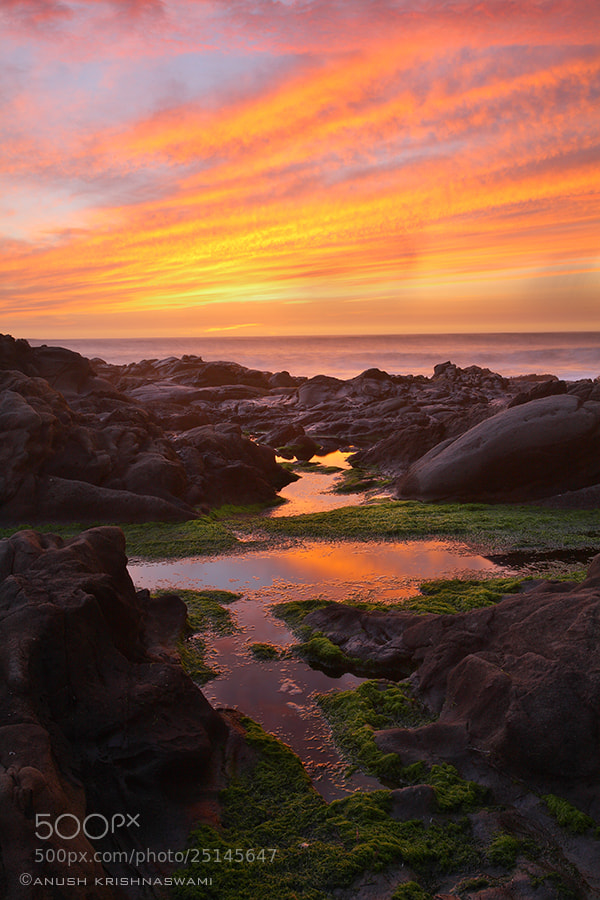 Photograph Magic Hour @ Bean Hollow State Beach by Anush Krishnaswami on 500px