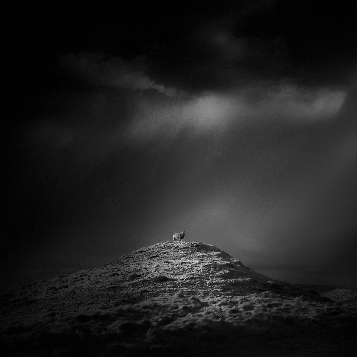 Photograph ewe and i on top of the world by Andy Lee on 500px