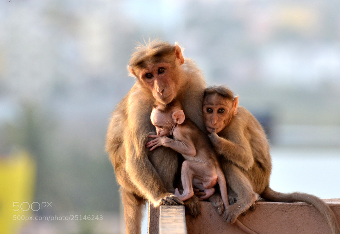Photograph Mother's Love... by Anji Vuyyuru on 500px