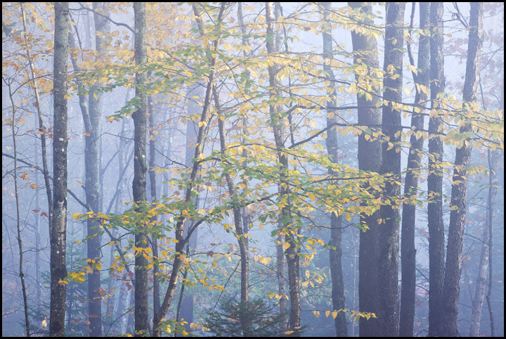 Photograph The Haunted Woods by Chris Kayler on 500px