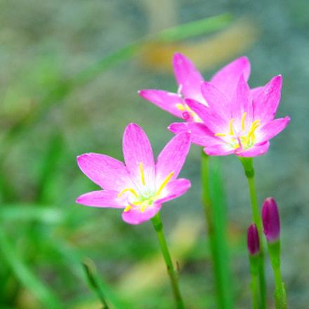 Flowers of new day, Pentax K-5 II S, Sigma 17-50mm F2.8 EX DC HSM