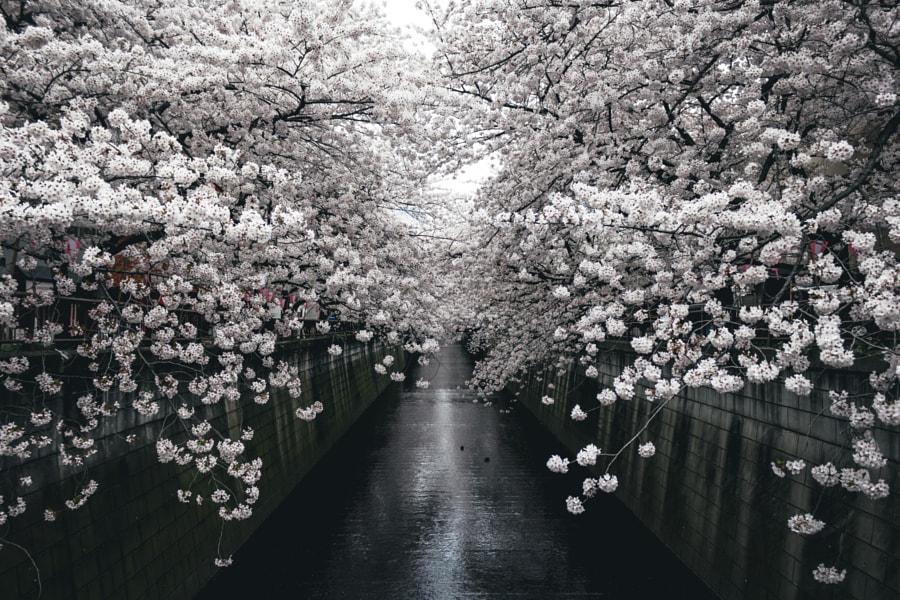 Meguro River by Yoshiro Ishii on 500px.com