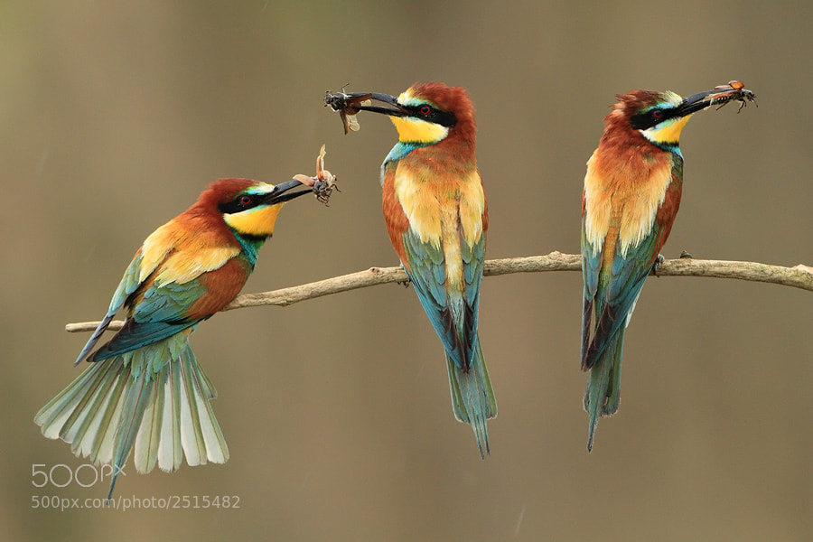 Photograph three musketeers by Marcin Nawrocki on 500px