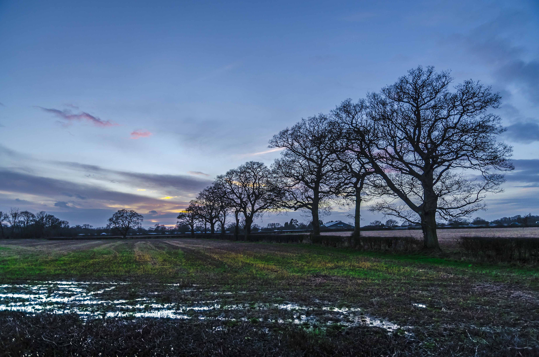 Photograph Nutfield line of trees colour by David Trotter on 500px