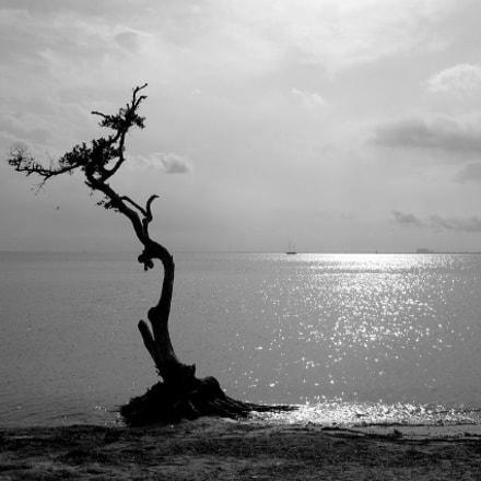 Tree, Canon POWERSHOT S410