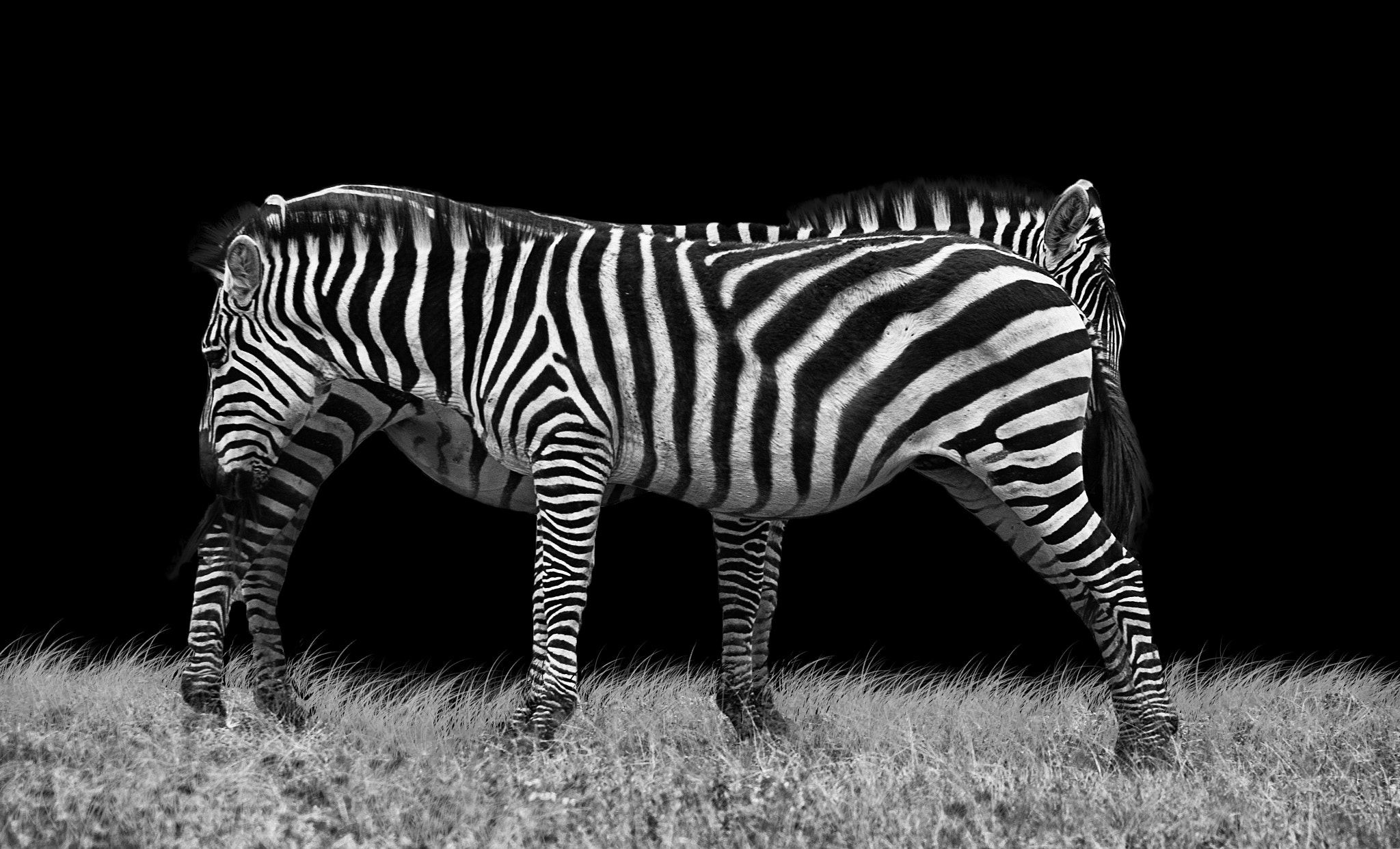 Photograph ~ Zebra crossing ~ by David O Sullivan on 500px