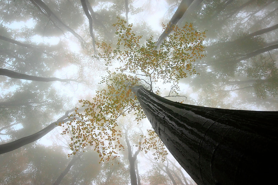 Photograph BEECH FOREST AFTER THE RAIN by Joanna Antosik on 500px