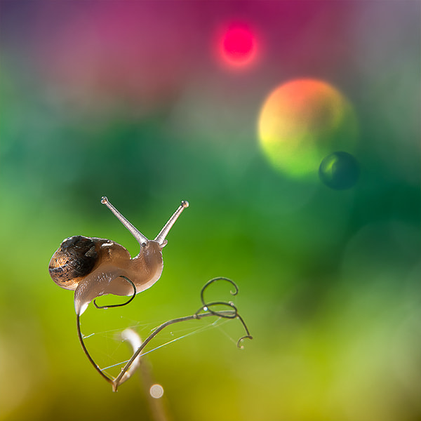 Photograph @ by Sylwia&Roman Zok on 500px