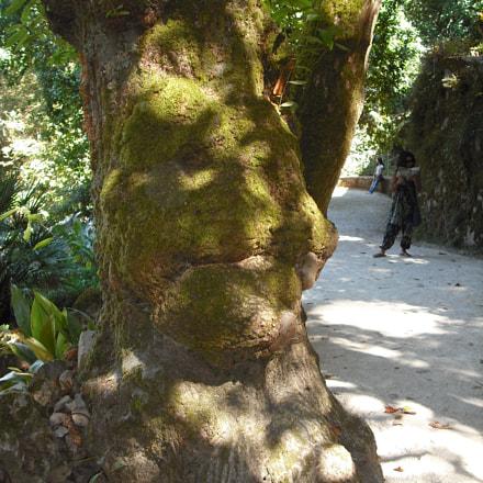 Tree with a Face, Fujifilm FinePix J10