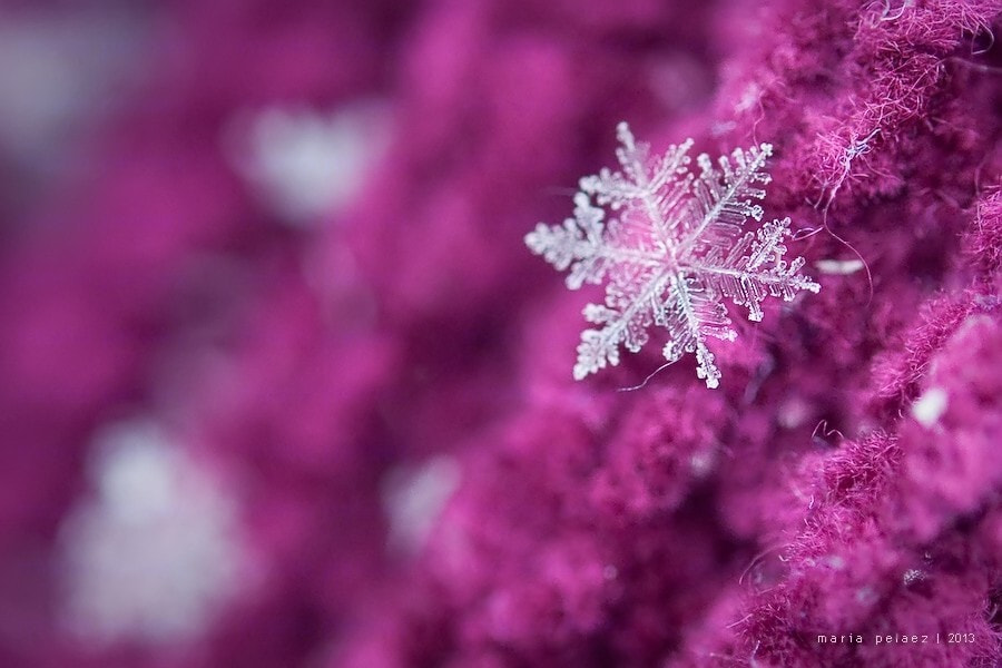 Photograph  || Snowflake ||  by Maria Pelaez on 500px
