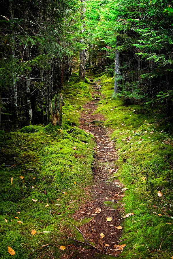 Katahdin path