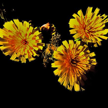 Borace fiori, Panasonic DMC-FS5
