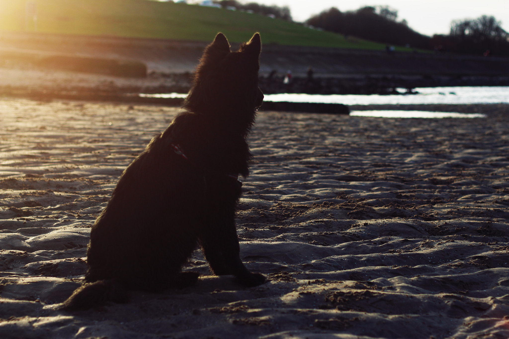 Photograph Brunos first day at the beach by Gordon Foley on 500px