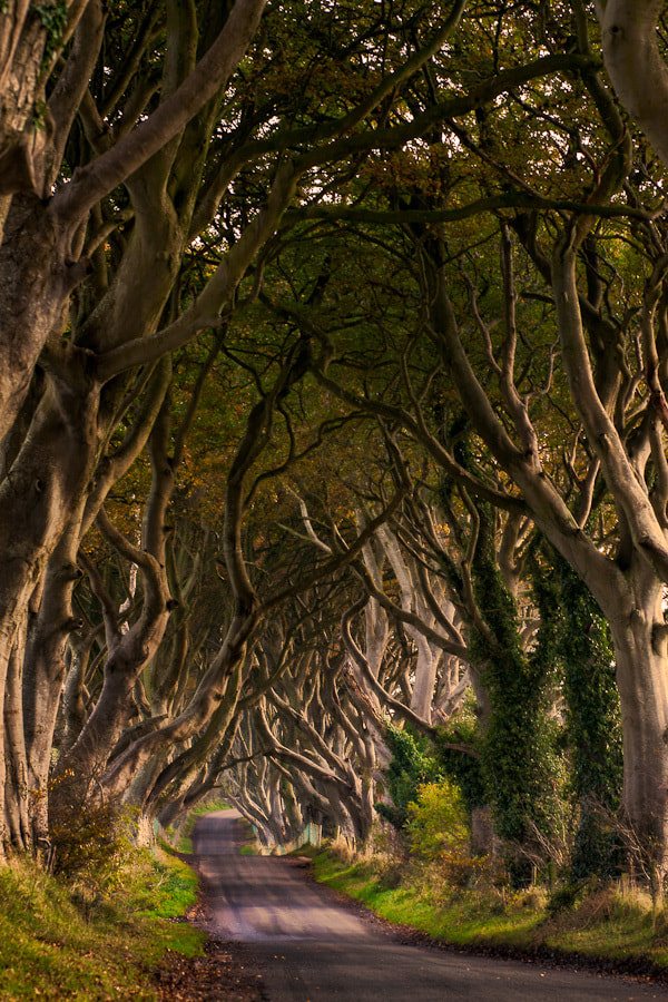 Photograph The Dark Hedges by Maximilian Pilz on 500px