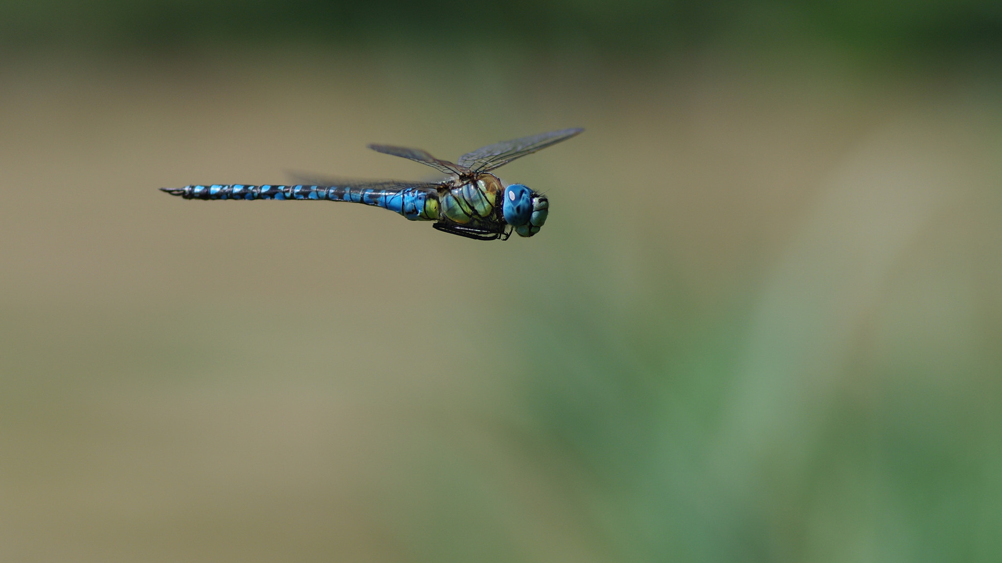 Photograph Hovering dragon by Marc LEVASSEUR on 500px