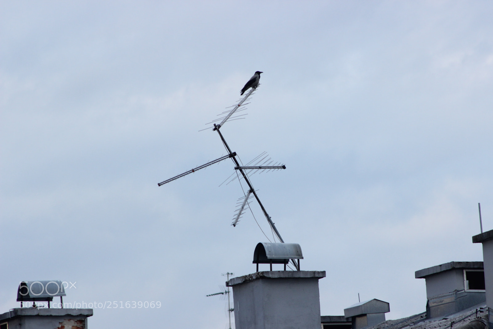"""Canon EOS 600D (Rebel EOS T3i / EOS Kiss X5) + Canon EF 90-300mm F4.5-5.6 USM sample photo. """"Sitting crow"""" photography"""