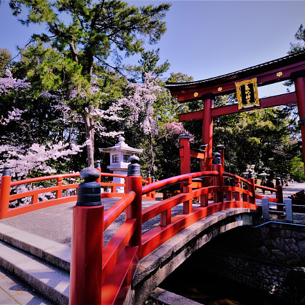 Kehi Jingu Torii Gate