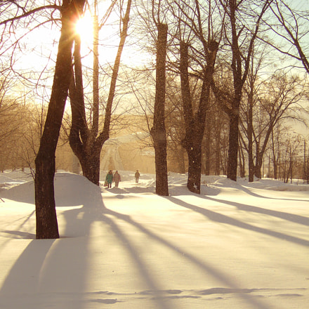 Грибной снегопад последнего дня марта, Fujifilm FinePix F11