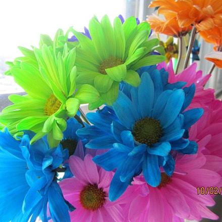 Rainbow flowers, Canon POWERSHOT SX210 IS