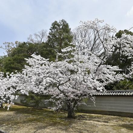 sakura, Nikon D750
