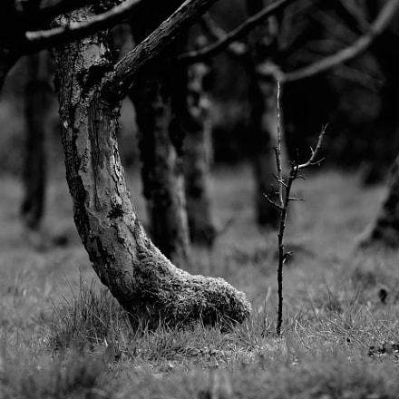 the small tree among, Nikon D500, AF VR Zoom-Nikkor 80-400mm f/4.5-5.6D ED