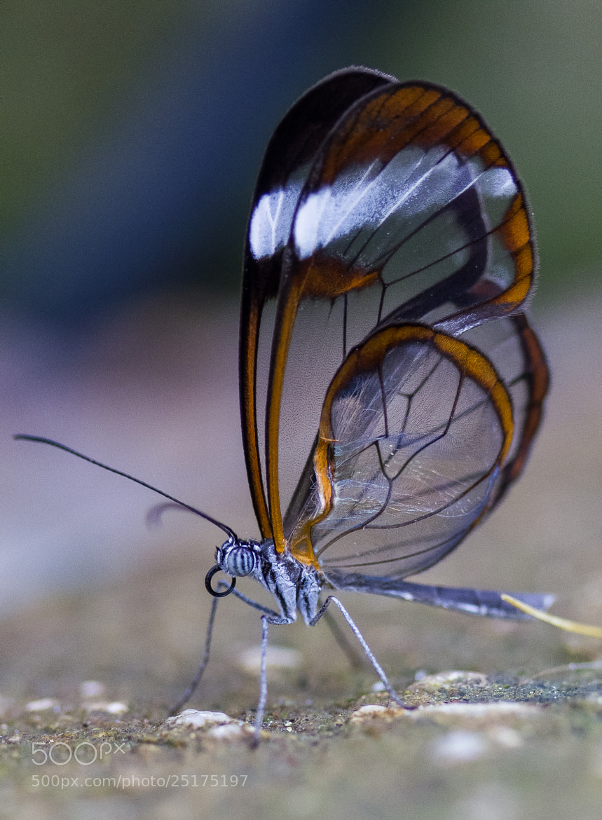 Photograph Crystal Wings by Alex Chu on 500px