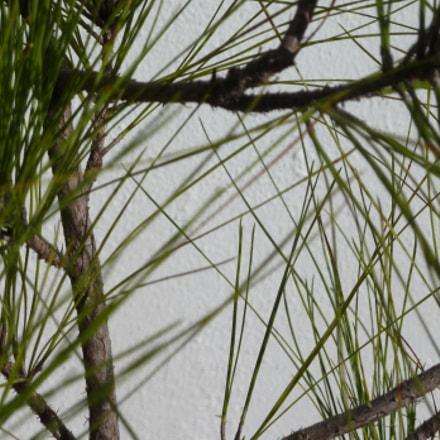 Pine, Panasonic DMC-ZS7