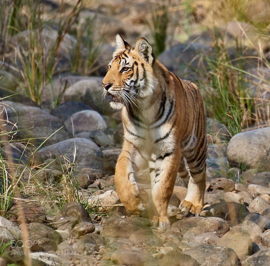 Shardul Rao (shardulrao) Photos / 500px