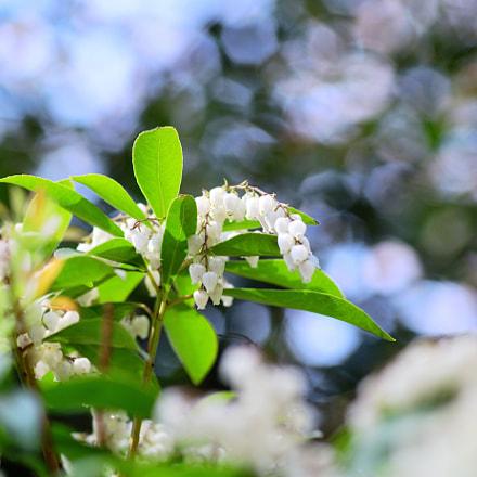 なんか花, Nikon D7500, Sigma Macro 105mm F2.8 EX DG