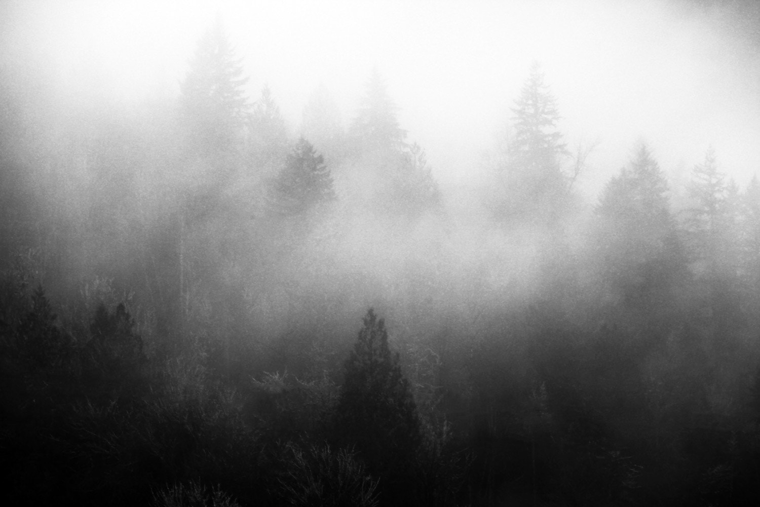 Photograph Mist of the Forest by Michael Rollins on 500px