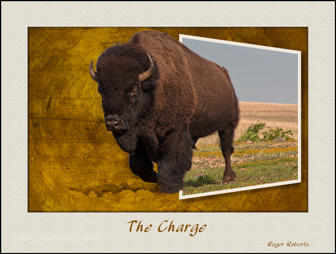 Photograph The Charge by Roger D Roberts on 500px