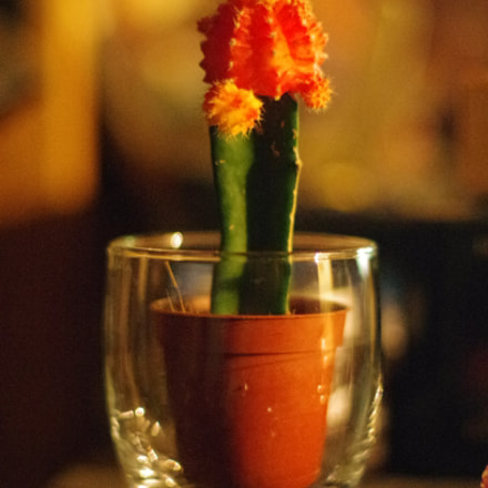 Cactus, Pentax K-5 II, smc PENTAX-FA 50mm F1.4