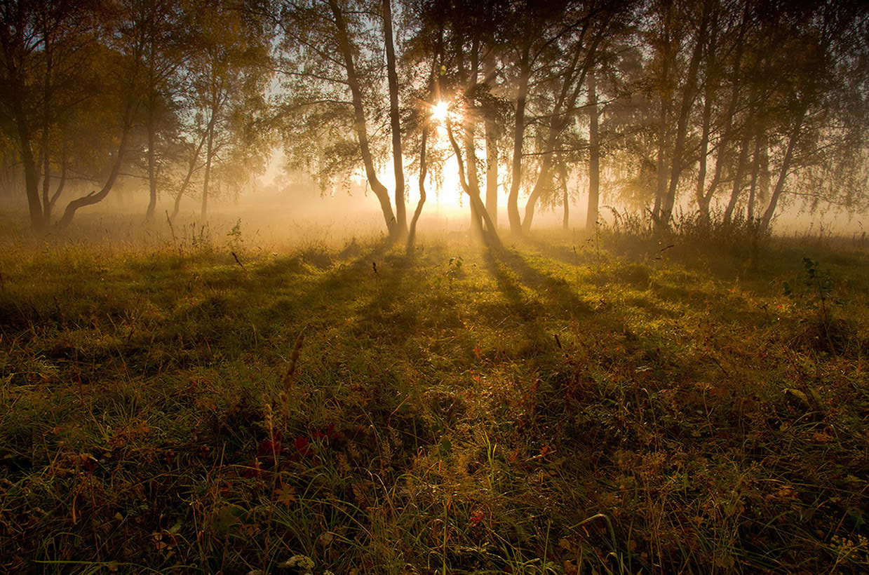 Photograph Morning wood by Valery Chichkin on 500px