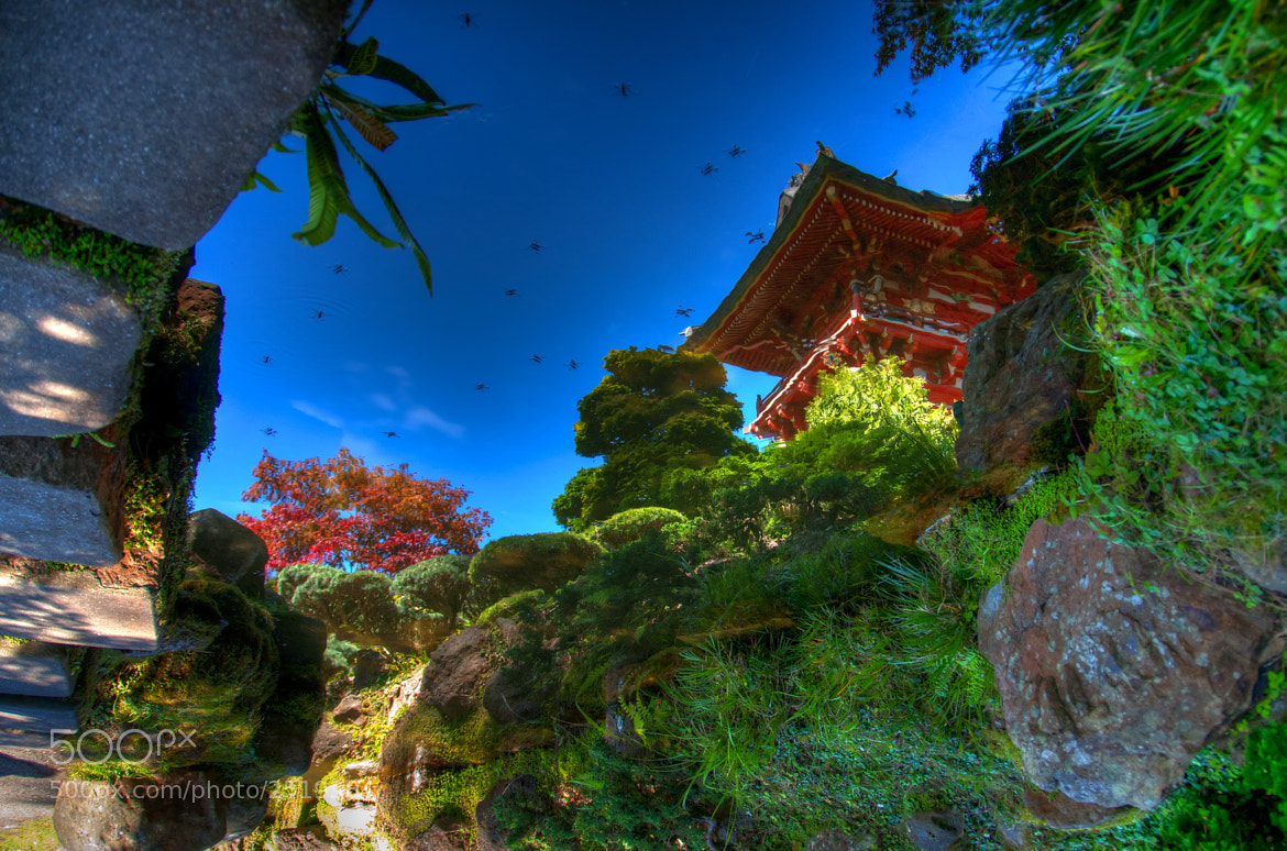 Photograph Japanese Tea Garden by Joe Borg on 500px