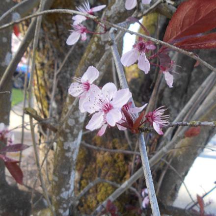 Pink Flowers Series Pt.1, Nikon COOLPIX L30