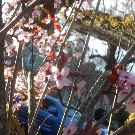 Pink Flowers Series Pt.2, Nikon COOLPIX L30