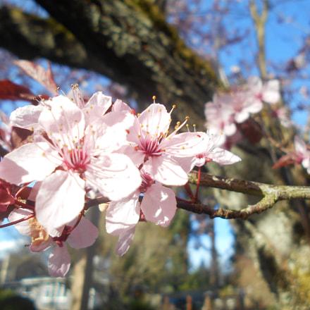 Pink Flowers Series Pt.4, Nikon COOLPIX L30